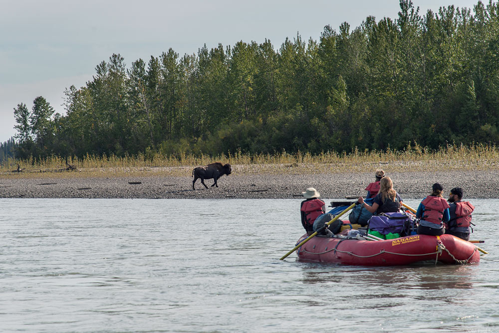Wildlife viewing on the Nahanni River in Nahanni National Park Preserve in Canada's Northwest Territories.