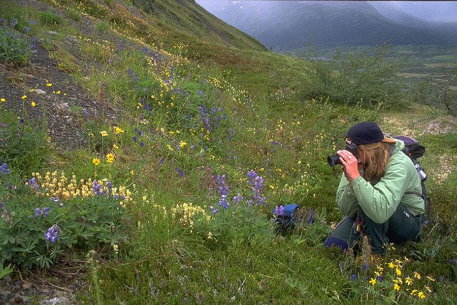 Viewing wildflowers on the shore of the Snake River in Yukon, Canada.